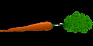 carrot-33625_1280
